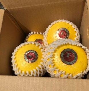 【贈答用】無農薬JAS有機栽培土佐文旦1箱(3kg)