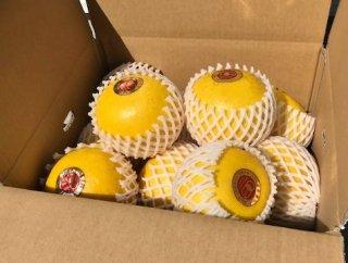 【贈答用】無農薬JAS有機栽培土佐文旦1箱(5kg)