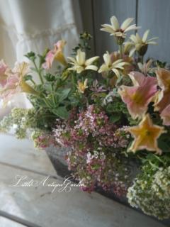 春カラーの華やかな寄せ植え