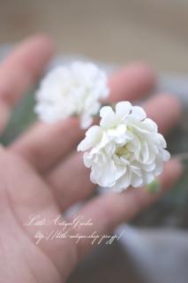 珍しい♡シレネ「スワンレイク」枝垂れるように咲く、八重咲きのエレガントなお花