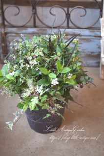LittleAntiqueGardenの育てるアレンジメント<br>八重咲きペンタス・ライカとセイロンライティアのもノートンの寄せ植え<br>ガーデンギャザリング