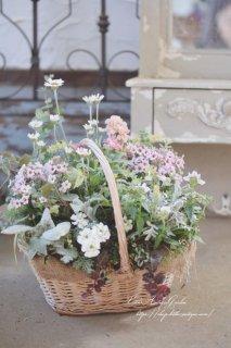 H.S様オーダー・春の花かごギャザリング 育てるアレンジメント<br>寄せ植えギャザリング