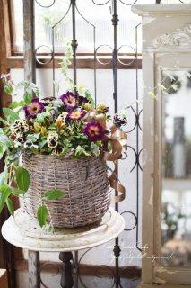 H.S様オーダー・花衣の大人シックな花かごギャザリング 育てるアレンジメント<br>寄せ植えギャザリング