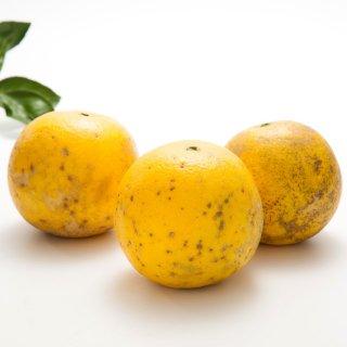 【ワケあり・家庭用】無農薬グレープフルーツ 1kg量り売り