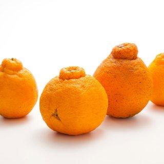 【全国送料込】 減農薬しらぬい(デコポン) 家庭用5kg