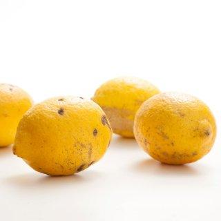 【露地栽培】無農薬レモン(量り売り/kg)