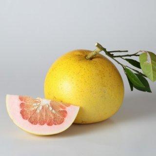 無農薬 紅晩白柚 1玉