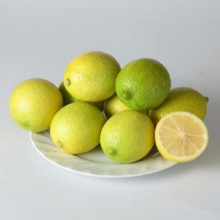 【極上品】無農薬ハウス栽培レモン (量り売り/kg)