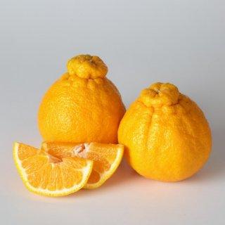 【全国送料込】 減農薬しらぬい(デコポン) 3kg