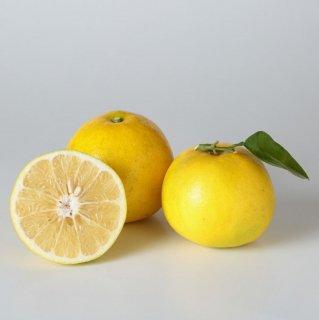 【良品】無農薬グレープフルーツ 1kg量り売り