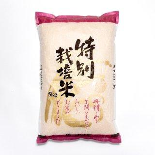 特別栽培米こしひかり 5�