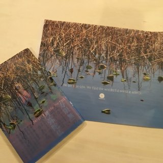 上野不忍池ブックカバー冬枯れの蓮