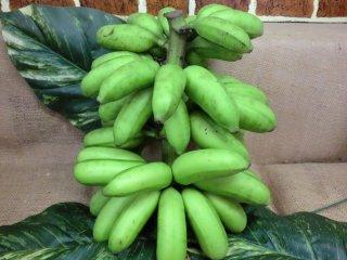 島バナナ 1kg 徳之島産