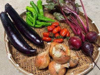旬の野菜 おまかせ5種セット