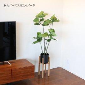 観葉植物ウンベラータ120cm