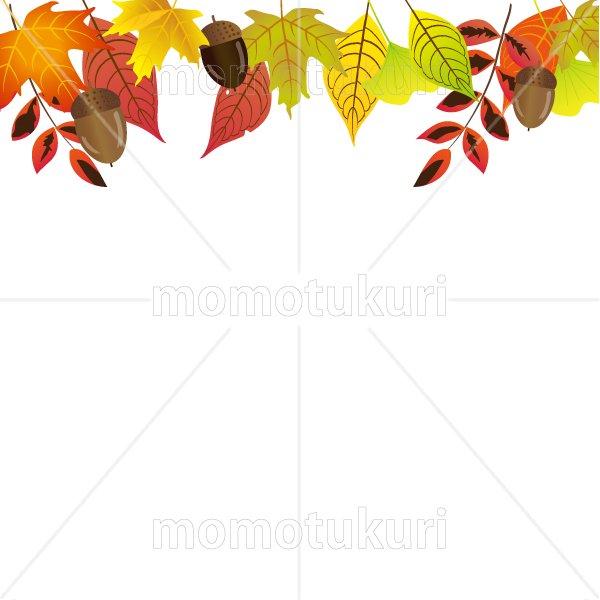 紅葉 もみじ  いちょう ナンテン 落ち葉 カエデ どんぐり