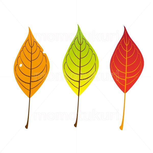 葉っぱ サクラ 3枚セット