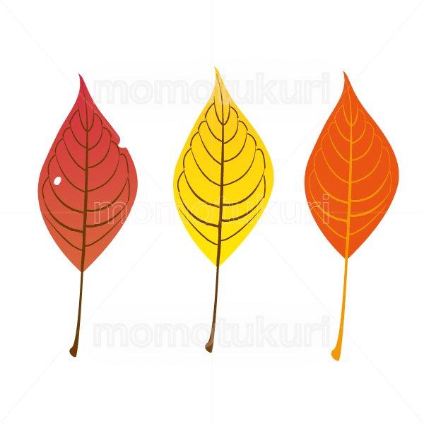 葉っぱ サクラ 3枚セット 2