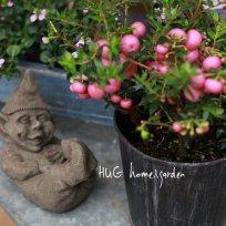 淡い色が魅力ペルネッティア『ピンク』ー真珠の木ー