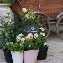HUG garden 寄せ植え『white&yellow set』