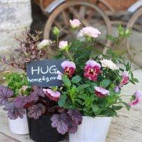 HUG garden 寄せ植え『pink set』
