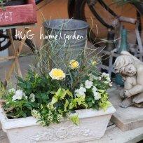 HUG home&garden 寄せ植え 『ふわふわ優しいホワイトカラーのお花たち』