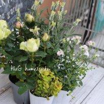HUG garden 寄せ植え花苗set