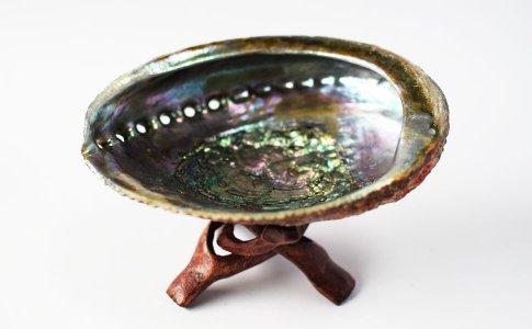 セージさざれ用の貝殻アバロンシェル大