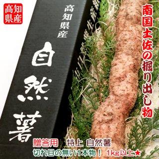 【贈答用】 【送料無料】 高知県産 特選 自然薯(じねんじょ) 1kg