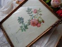 ルドティのバラ