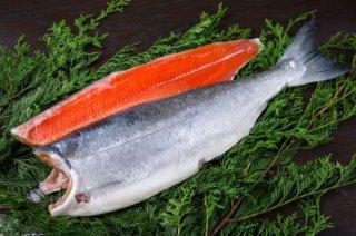 【ロシア産】塩紅鮭1尾切身(2.0kg)箱詰め