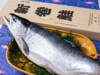 【北海道産】 本紅鮭1尾(約1.6kg)姿
