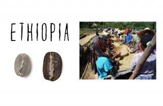 エチオピア イルガチャフィー コンガ農協/200g