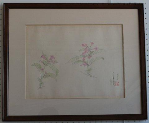 山ウツギ/相馬仟里 (素描)