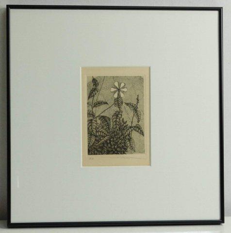 野の花/渡辺達正 (銅版画)