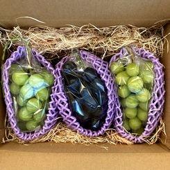 葡萄2品種詰め合わせ 約1.5�