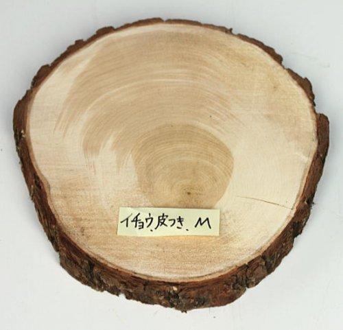 木の年輪板 イチョウ 樹皮つき Mサイズ(21-24cm)