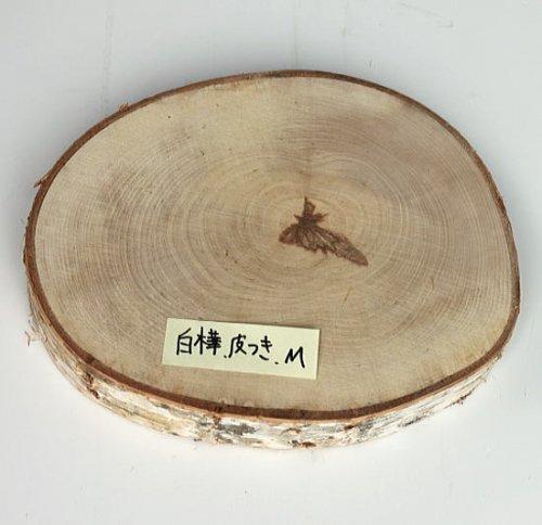 木の年輪板 しらかば 樹皮つき Mサイズ(21-24cm)