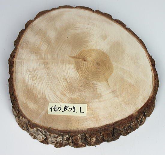 木の年輪板 イチョウ 樹皮つき Lサイズ(25-27cm)
