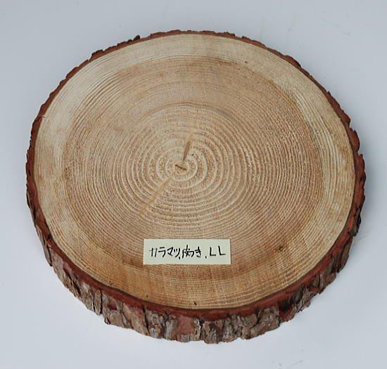 木の年輪板 マツ 樹皮つき LLサイズ(28-35cm)