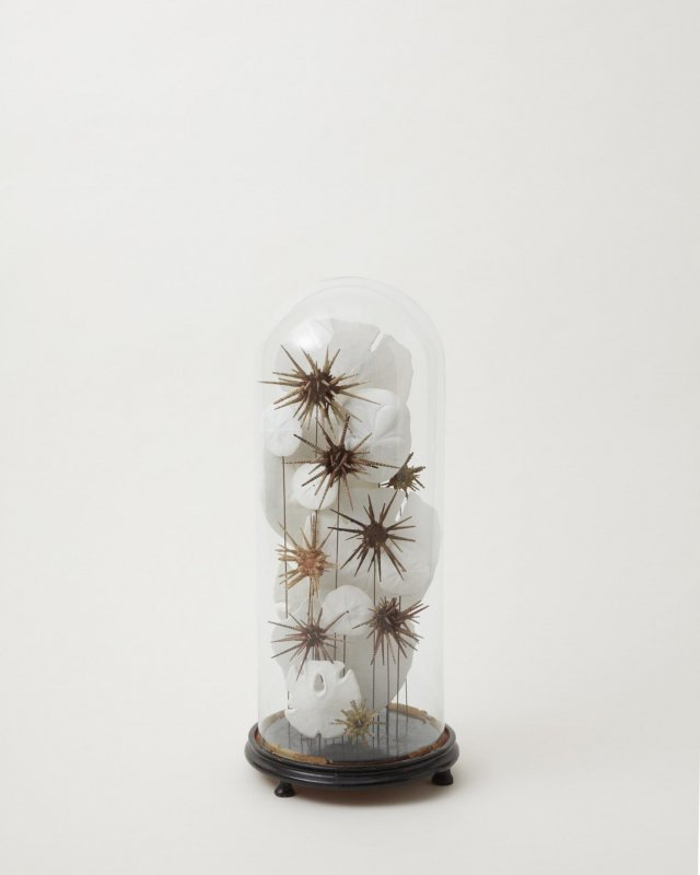 Glass Dome - urchin