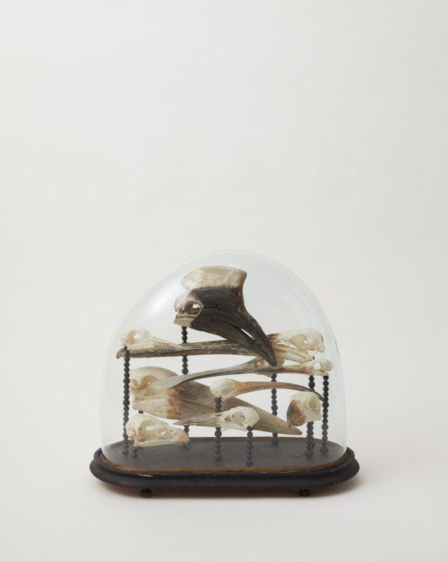 Glass Domes - bird