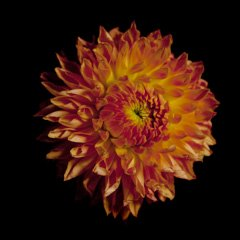 FLOWER_B