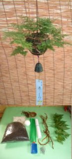 日本産つりしのぶ 約15cm玉材料セット