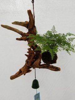 吊り下げ用 流木しのぶ玉(約9cm玉)