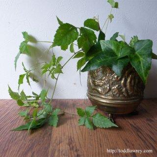 ライオン脚をもつ薔薇の器 / Antique Brass Rose Small Pot A