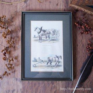 働く馬の美しさを思う /Antique Hand Coloured Print