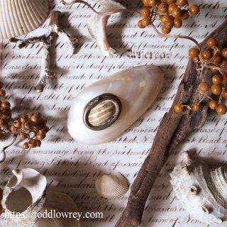 ひと夏の思い出を抱きしめて / Antique Sea Shell Hinged Trinket Box