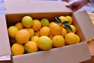 小豆島産レモン5キロ(約40個)