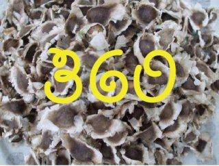 モリンガネシアンの種 360粒